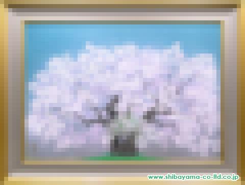 中島千波「竹野おまき桜」s50号